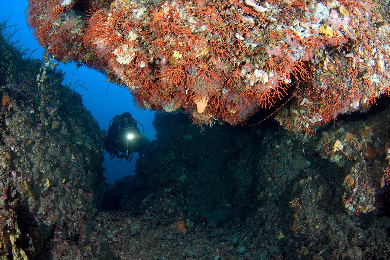 Tauchen nach Korallen bei Costa Paradiso