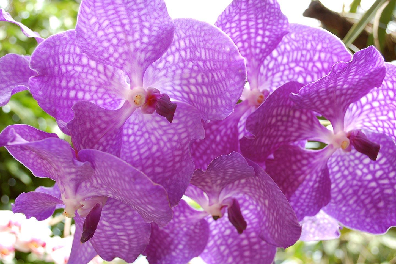 Orchidee im Giardini La Mortella auf Ischia