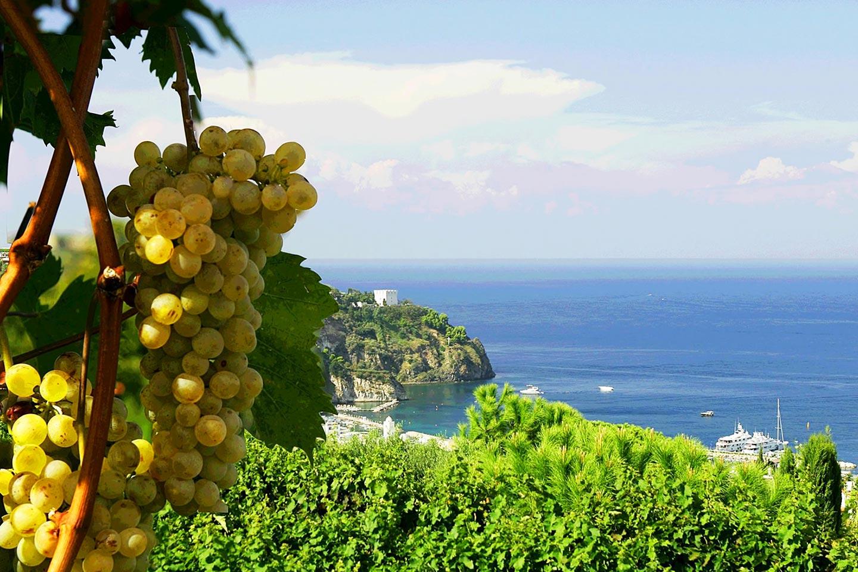 Winzer Tommasone auf Ischia